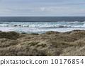 Pacific Ocean grass sand dunes surf 10176854