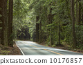 Northern California Redwood Forest Road  10176857