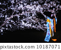 kimono, cherry blossoms at night, cherry trees in the evening 10187071