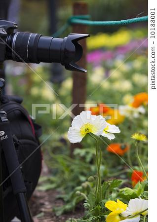 攝影與花 10188001