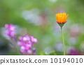 花朵 花 花卉 10194010