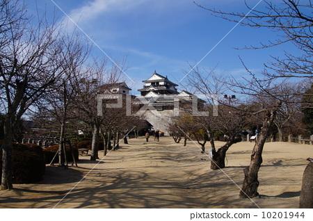 Matsuyama Castle 10201944