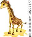 长颈鹿 动物 可爱 10205477