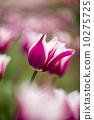 摄影 心情 春季 10275725