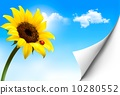 向量 向量圖 太陽 10280552