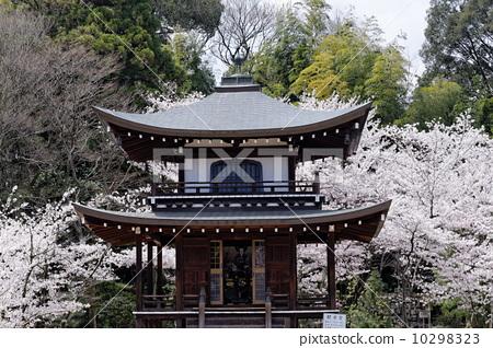 Kaido-do寺廟 10298323