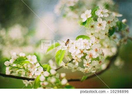 春天 10298896