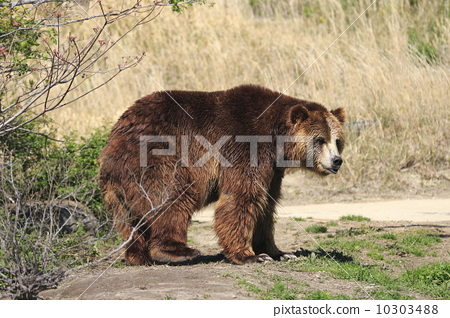 Stock Photo: terrestrial animal, baby animals, Animals And Pets