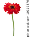 blossom, bloom, beautiful 10316876