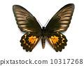 蝴蝶 昆蟲 美女 10317268