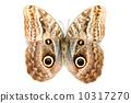 蝴蝶 昆蟲 美女 10317270