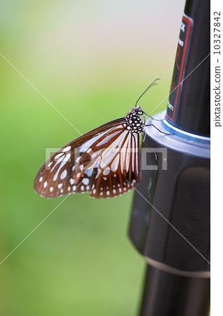 아름다운 나비 10327842
