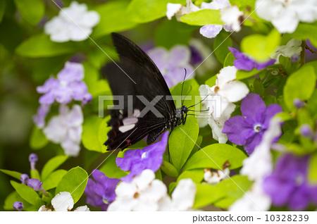 花丛中的蝴蝶 10328239