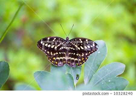 蝴蝶在葉子上 10328240