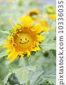 ทานตะวันดอกไม้ฤดูร้อน (ยิ้ม) 10336035
