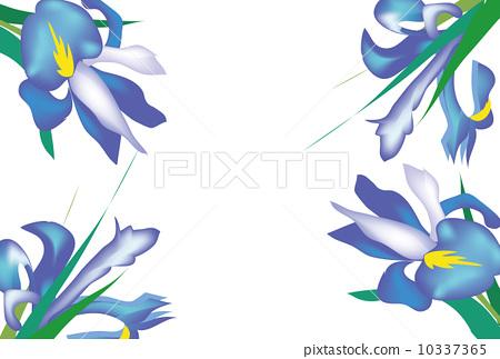 Multipurpose card of iris flowers 10337365