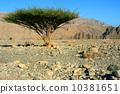 分支 樹木 樹 10381651