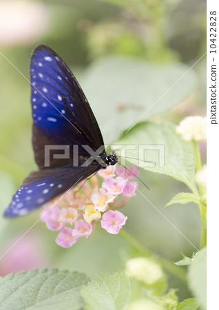 蝴蝶在花朵上 10422828