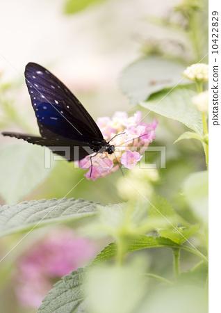 蝴蝶在花朵上 10422829