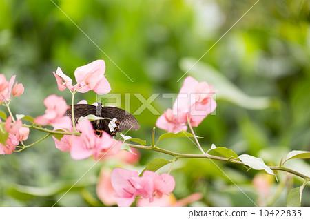 蝴蝶在花叢中 10422833