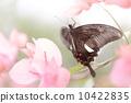 美麗的蝴蝶 10422835