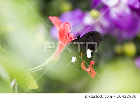 花丛中的蝴蝶 10422836