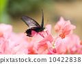 花叢中的蝴蝶 10422838