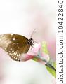 美麗的蝴蝶 10422840