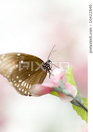 美丽的蝴蝶 10422840