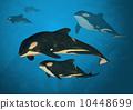 Orca Family 10448699