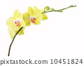 Orchid flower 10451824