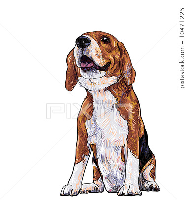 Beagle 10471225