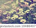 春天的花朵 10486407