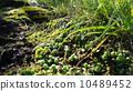 Green plant 01 Spring sunlight 10489452