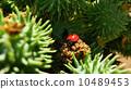 瓢虫 环保 生态学 10489453