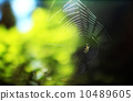 Spider and spider's nest in sunlight Oregon 10489605