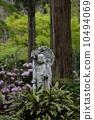 Sanzenin的Ozakura先生 10494069