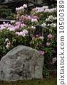 法律優越的服裝石 10500389