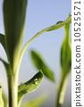 Nature bamboo background 10525571