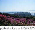 진달래와 쿠시마 10529325