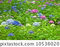 พืชไม้ดอกขนาดใหญ่ 10536020