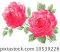 장미, 장미꽃, 로즈 10539226