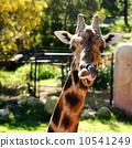neck, mammal, head 10541249