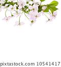 branch, apple, petal 10541417