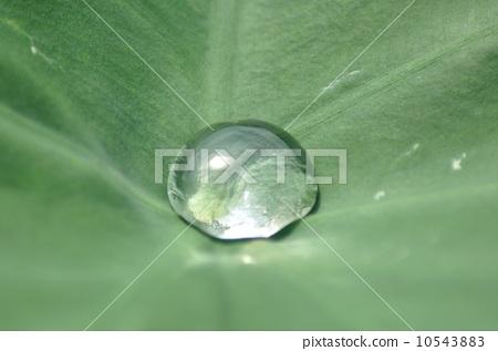 잎 10543883