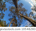 trunk, nature, branch 10546283