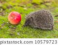 刺猬 动物 宠物 10579723
