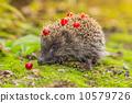 刺猬 动物 自然 10579726