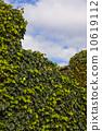 잎, 녹색, 푸른 10619112