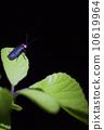 萤火虫 10619964